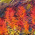 Autumn Fireweed, Point Louisa