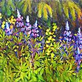 Lupine, Fish Creek
